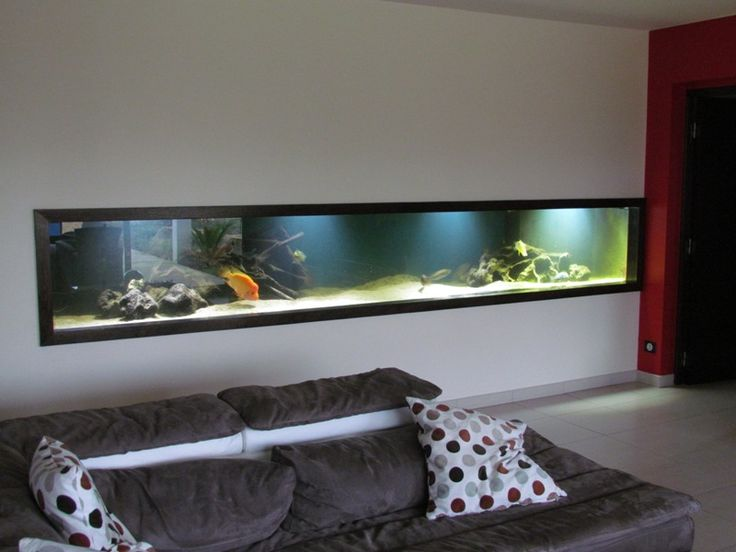 aquarium dans un mur homeezy. Black Bedroom Furniture Sets. Home Design Ideas