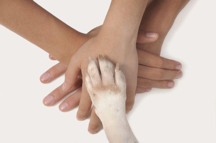 La pet-therapy si può fare anche online, lo dimostra un nuovo fenomeno nato da poco per aiutare un ragazzo di 16 anni, Anthony Lyons che è ammalato di luce