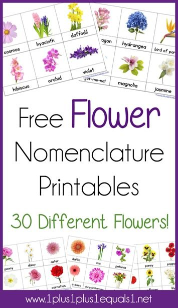 Free Flower Nomenclature Printables from 1+1+1=1