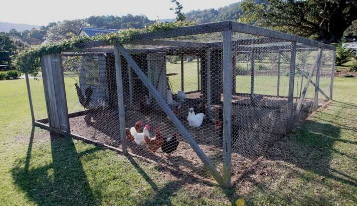 Best 25 chicken enclosure ideas on pinterest chicken for Chicken enclosure ideas