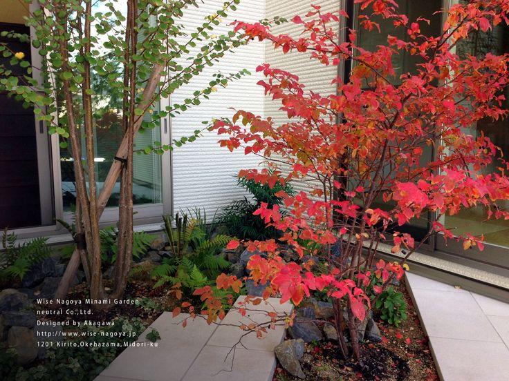 庭木ナツハゼの紅葉 | 愛知県の外構【ニュートラル】オフィス名古屋のブログ