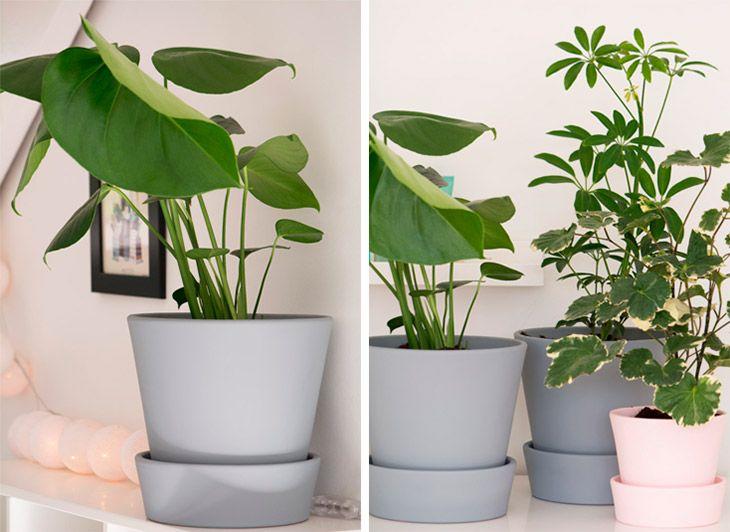 Få malet fine krukker til alle indendørsplanterne i lige den farve der passer til din indretning - nemt og billigt - se her hvordan