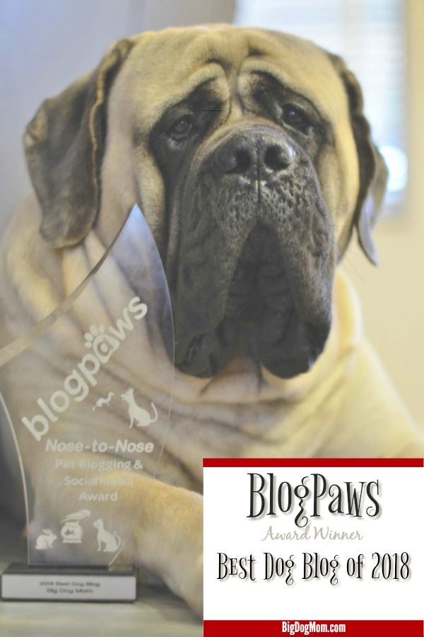 Big Dog Mom Is The Blogpaws Winner For Best Dog Blog Of 2018 Dog