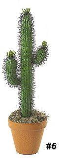 Cactus voyeur pic think, that