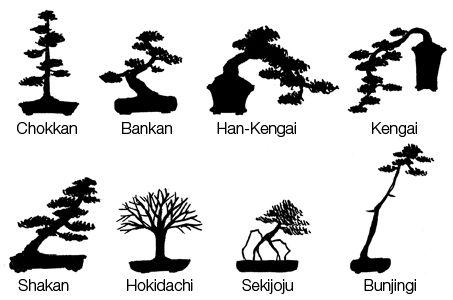 najpopularniejsze style bonsai
