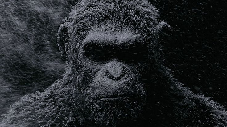 Watch War for the Planet of the Apes Full Movie A nation of genetically evolved apes led by Caesar becomes embroiled in a battle with an army of humans..