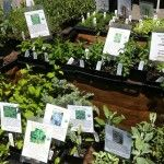 Shopping for herb plants at the farmers market. Planting An Urban Patio Herb Garden In 4 Easy Steps -