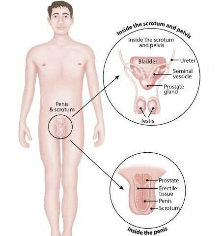 Signs And Symptoms Of Male Menopause ~ Interesting!