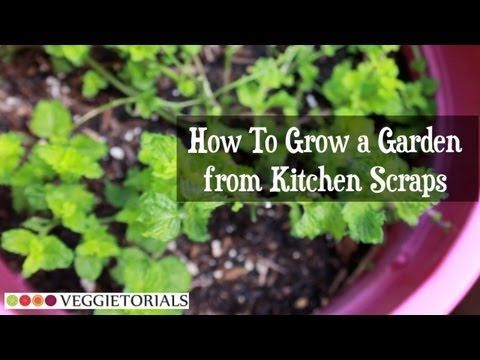 Grow a Vegetable Garden from Kitchen Scraps. Want a garden on the cheap? Grown your own garden from veggie scraps that you would normally trim away and toss in the compost bin!