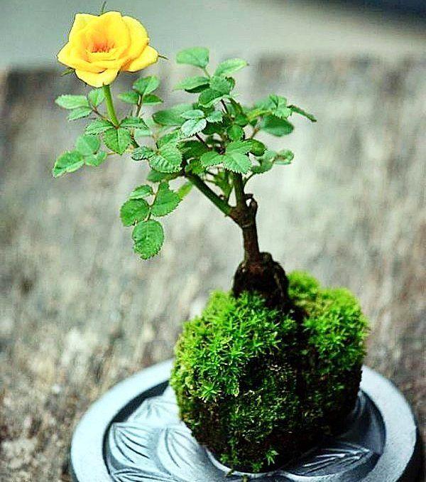#Kokedama - o que é com ter e como manter? Veja no #simplesdecoracao o passo-a-passo feito pela @marcianassrallah_ambientes só pra você! Link no perfil #jardinagem #plantas #jardinsemvasos