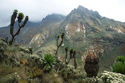 Mountain Rwenzori Hike http://ugandasafariholiday.com/portfolio/mountain-rwenzori-exclusive-10-days-html
