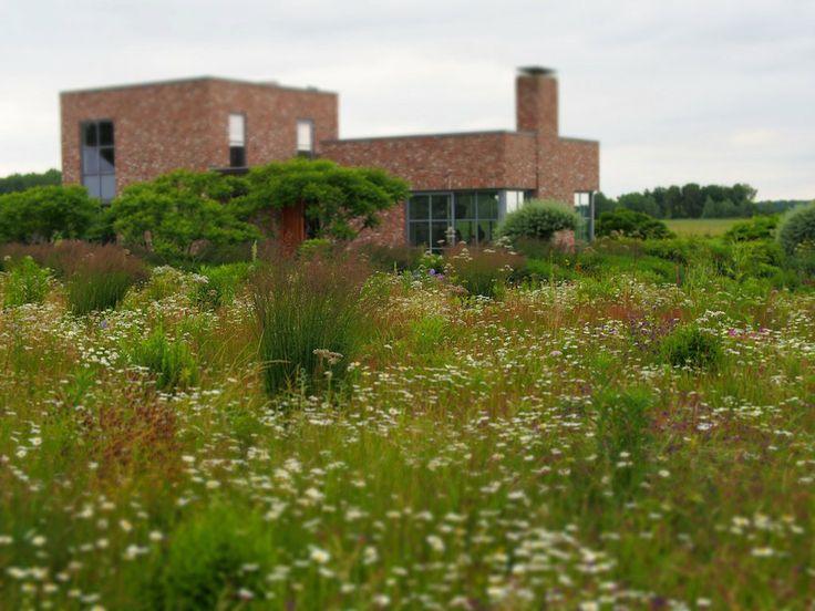 168 best piet oudolf gardens images on pinterest for Piet oudolf landscape architect