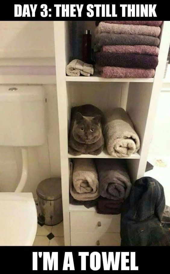22 Funny cat memes and pictures with captions