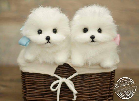Puppy Spitz Made To Orderteddy Dog Little Spitz Etsy In 2020 Teddy Dog Toy Puppies Puppies