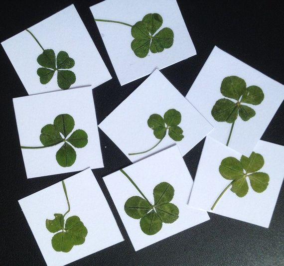 VERITABLE trèfle à 4 feuilles porte bonheur  par PARISporteBonheur