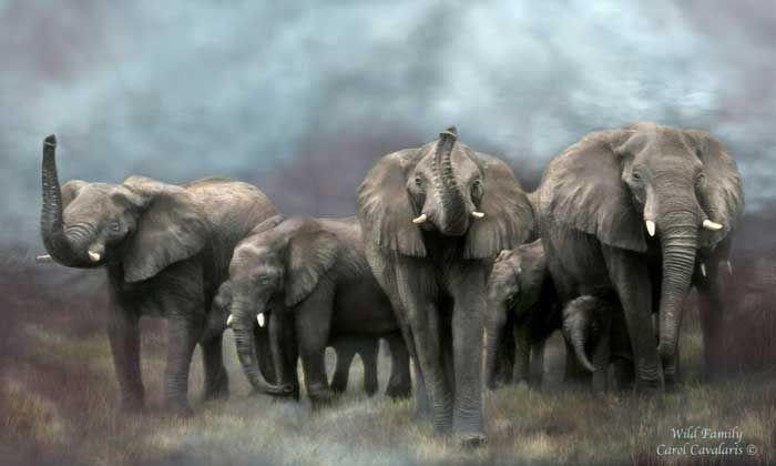 Wild Family AS