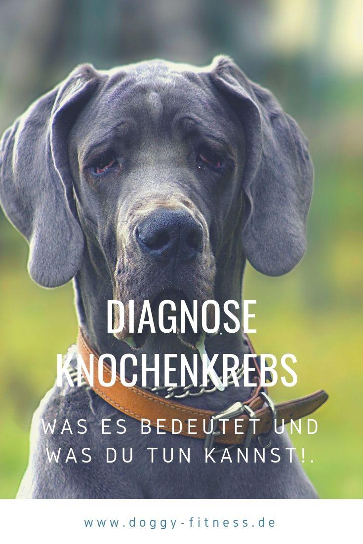 Knochenkrebs Beim Hund Alle Fakten Zur Erkrankung