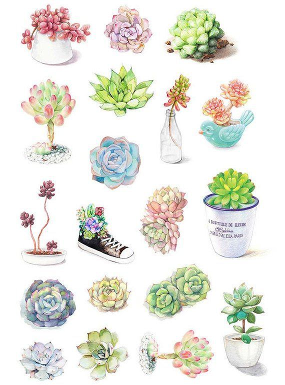 Succulent Plants Stickers 19 Pcs Watercolor Illustration Sticker
