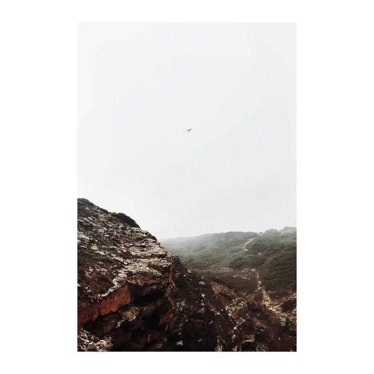 #flying #bird #minimal #minimalism #photography #isabelpettinato