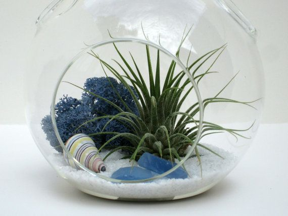White Sands Terrarium Kit Hanging Glass Globe Glass Orb