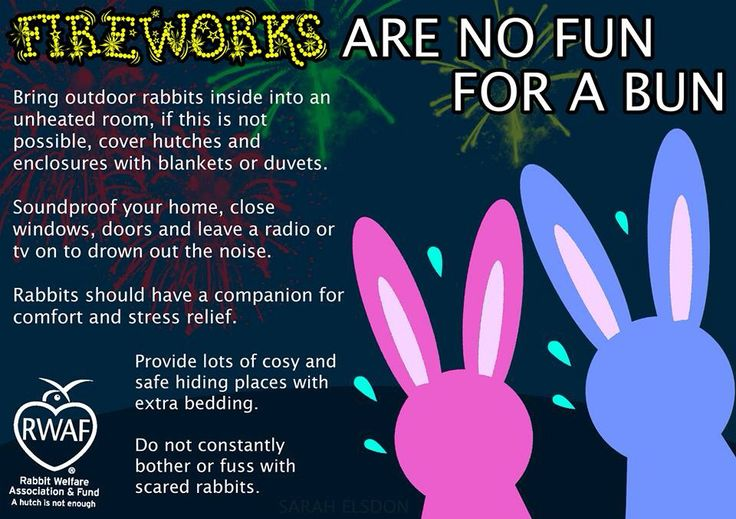 Make sure you know how to keep your bunny rabbit safe during firework season