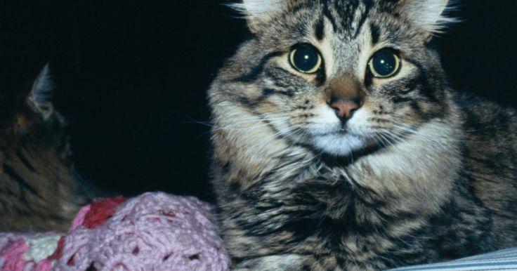 Como remover pelos de gato de cobertores