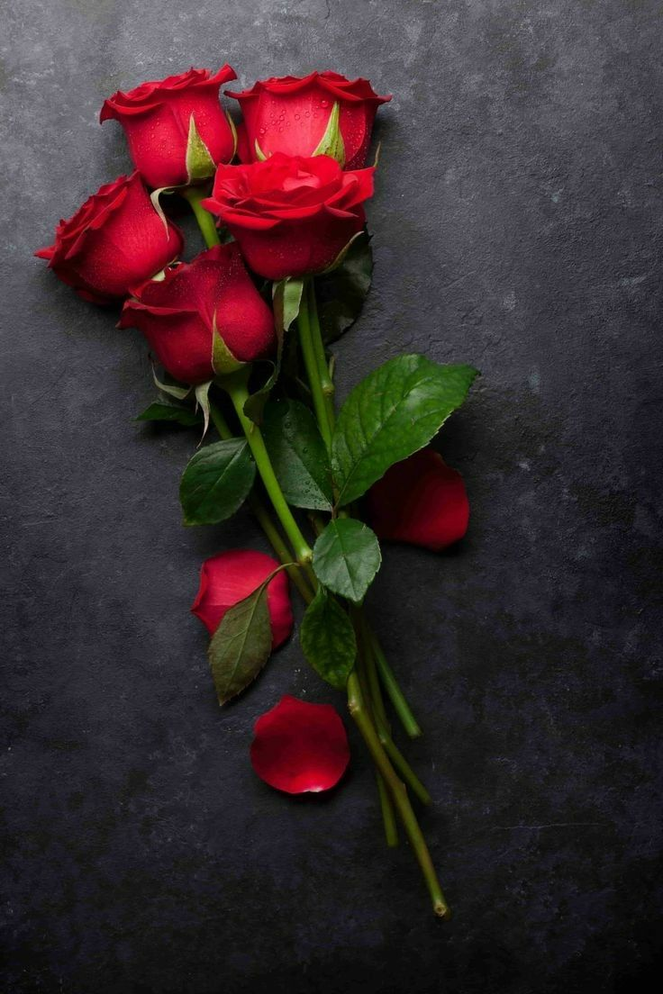 Pin By K M Khan On Wallpaper Hd In 2020 Rose Flower Wallpaper Beautiful Rose Flowers Red Roses Wallpaper