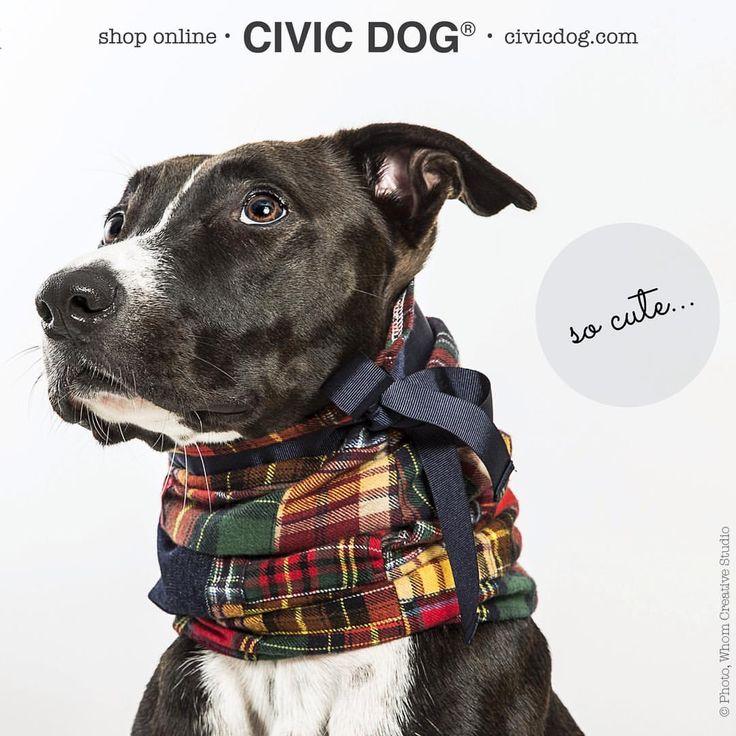 "O Clube da Tula en Instagram: ""@samoa.kai, otra fan de la gola #civicdog by O Clube da Tula. Shop online at civicdog.com. #patchwork #patchworkshow #galgos #galgos #greyhound #greyhounds #pitbull #dog #dogstagram #fashion #fashionblogger #fashionista #fashionistas"""
