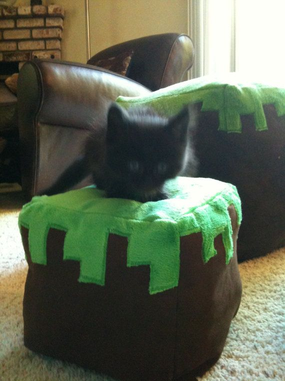 Plush Minecraft Grass Block, I know this should be the focus but that kitten!