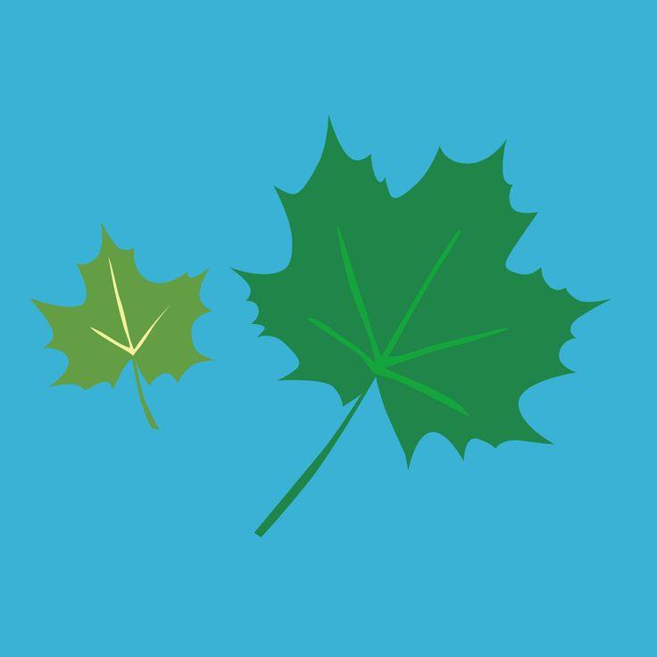 Oggi è la Giornata Internazionale della biodiversità. Rispettiamo l'ambiente, perché diverso è bello!