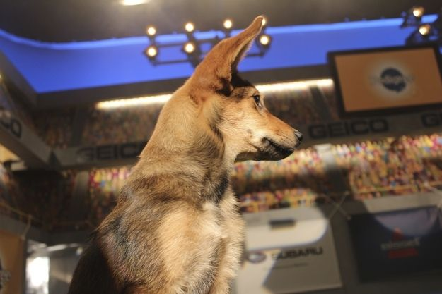The Puppy Bowl is the most important sporting event of the year. | 61 Adorable Behind The Scenes Moments At Puppy Bowl X