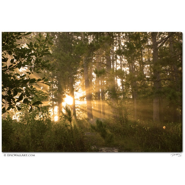 """""""Golden Forest Sunlight"""" Fine Art Gallery Wrapped Canvas Print    Golden sunlight bursts through forest trees and the morning fog in this awe-inspiring scene of Nature, captured from the northwoods of Minnesota."""