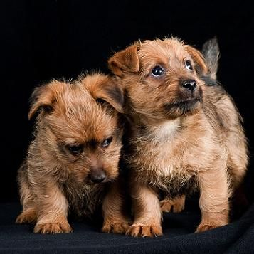 how to stop puppy urinating at night