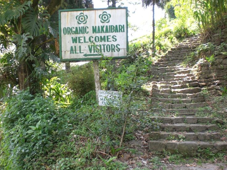 Sign at Makaibari Tea Estates