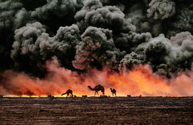 Camels and Oil Fields    KUWAIT-10001