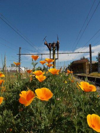 Estación de Ferrocarriles de Linares, Chile.