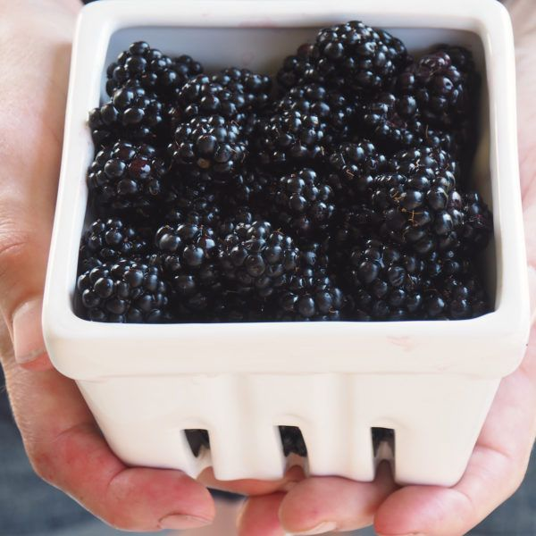 I learned something new about blackberries this year. They have worms. Teeny tiny, creepy crawly, little white worms. Not always of course, but often enough that 'worms in blackberries' is a common Google search. Ok, so they're not worms, exactly. They're actually fruit fly larvae. And, while...