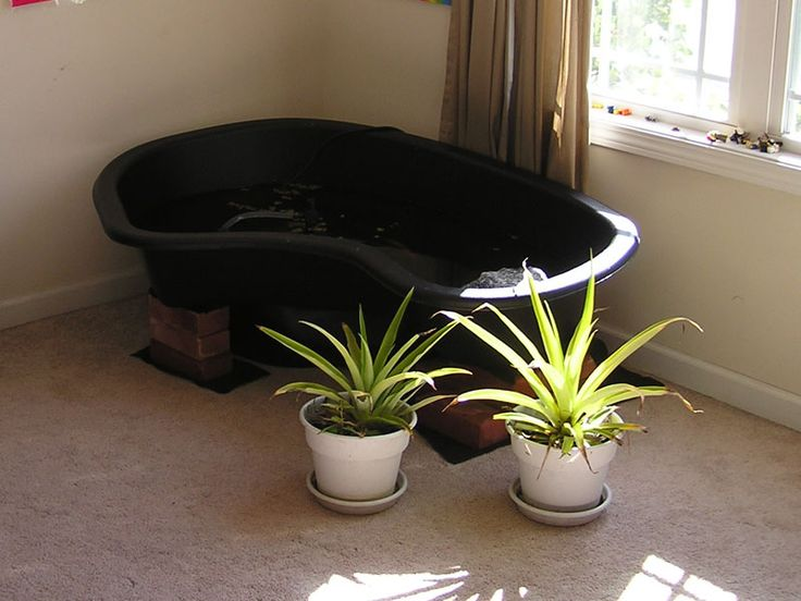 Indoor turtle pond kits habitat outdoor diy pond for Indoor fish pond ideas