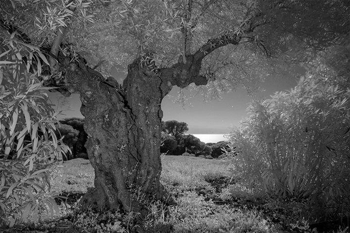 Fotografia notturna all'infrarosso scattata con X-T1 IR e XF16-55