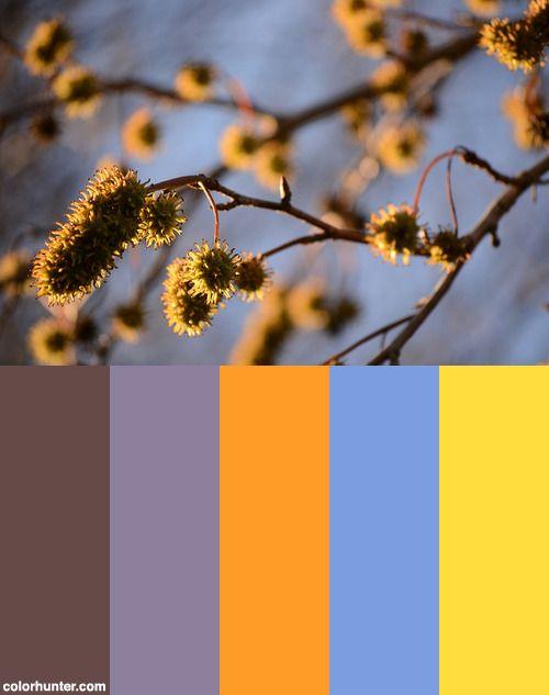Spines Color Scheme