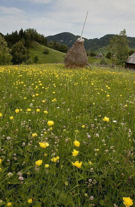 Authentic Romanian landscape, www.romaniasfriends.com