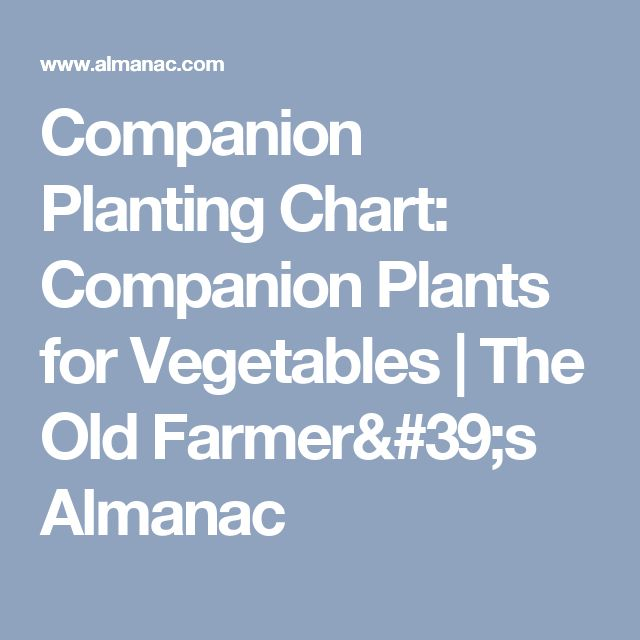 Companion Planting Chart: Companion Plants for Vegetables | The Old Farmer's Almanac