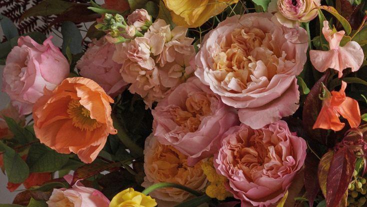 EDITH - David Austin Luxury Cut Roses