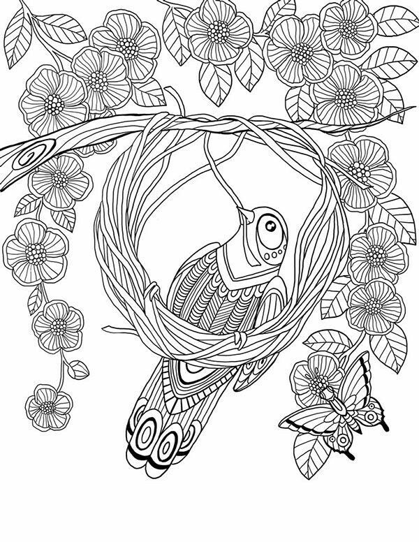 bird making a nest from 52 semaines pour me donner des ailes flower butterfly abstract doodle zentangle coloring pages colouring adult detailed advanced - Advanced Coloring Pages Butterfly