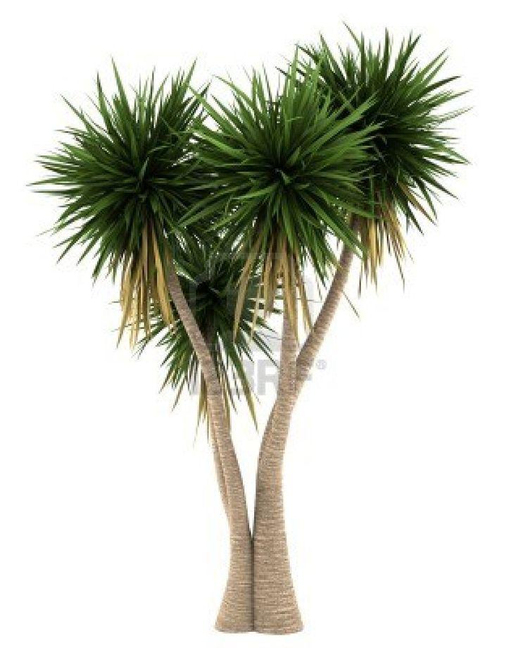 yucca tree - Google Search