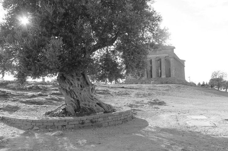 Temple of Concordia, 440-430 BC, Agrigento. Picture by Marta Laureanti