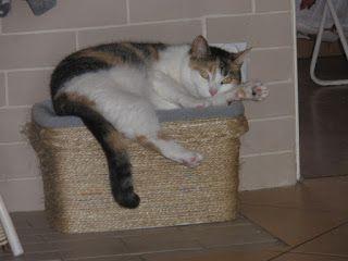 groszowe historie: Drapak dla kota - zrób to sam