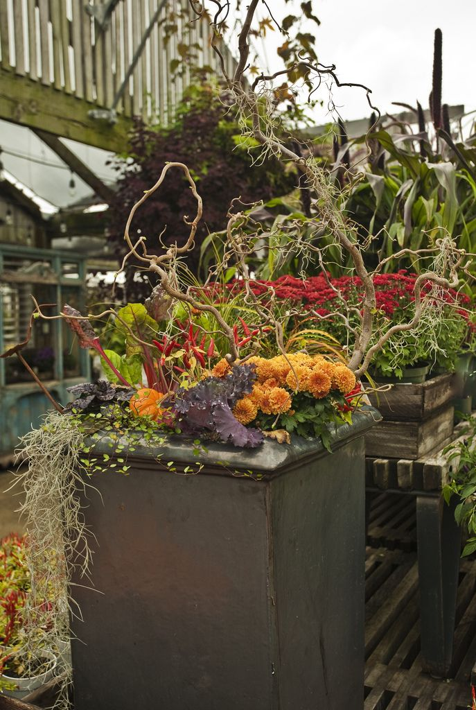Image By Terrain Fall Planters Pinterest Photos And
