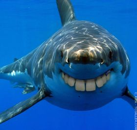 Tiburón con dentadura humana