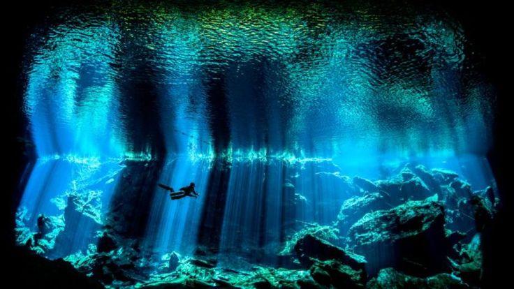 Impressionantes imagens da Competição de Fotografia Subaquática de 2017 | HypeScience